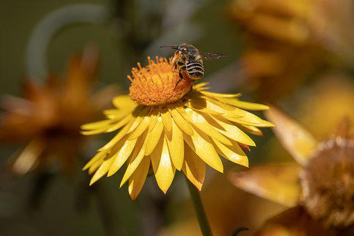 Nature, Flora, Flower, Insect, Outdoors, Closeup, Bee