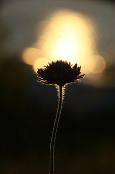 The Nature Of The, Flower, Outdoors, Silhouett, Sunset
