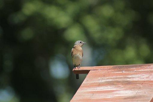 Nature, Outdoors, Bird, Wildlife, Little