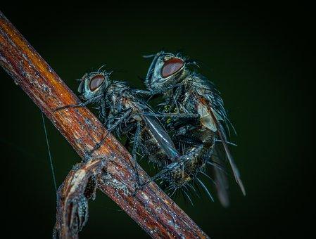 Insect, Bespozvonochnoe, Animals, Living Nature, Fly