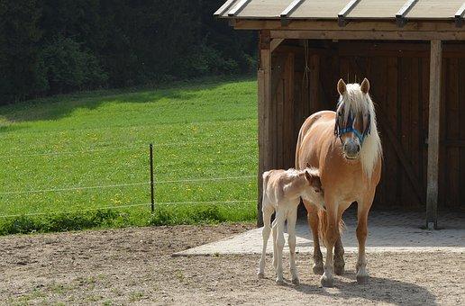 Mare, Foal