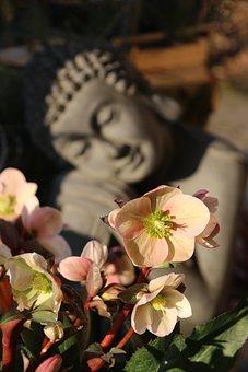 Human, Flowers, Meditation, Asia