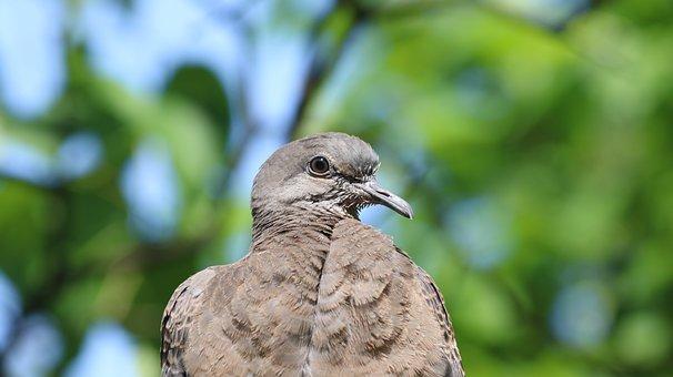 Nature, New, Wildlife, Animal, Outdoors, Park, Pigeon