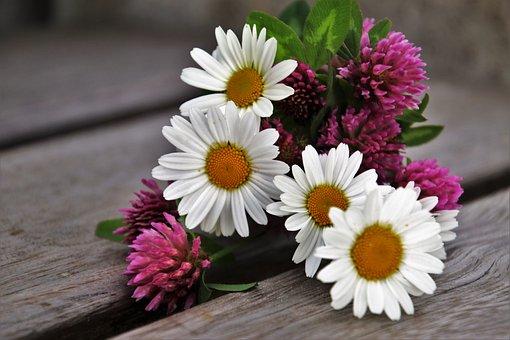 Spring, Clover, Flower, Nature, Plant, Summer, Petal