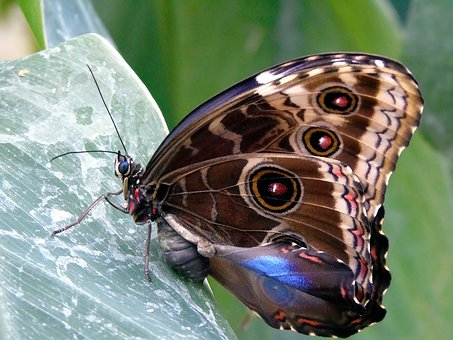 Nature, Butterfly, Insect, Animal, Wing, Wildlife