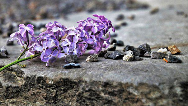 Without, Violet, Nature, Spring, Flower, Plant