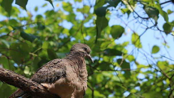 Nature, Wood, Outdoors, Leaf, Park, Pigeon
