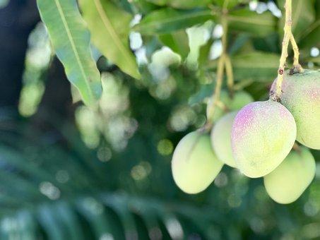 Fruit, Leaf, Food, Nature, Flora, Tree, Outdoors