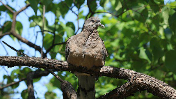 Nature, Wood, New, Animal, Park, Wild, Pigeon