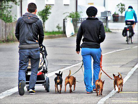Dog House, Street, People, Friendship, Walkway
