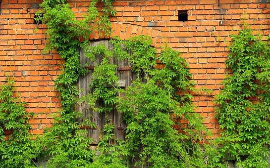 Ivy, Lake Dusia, Creeper, Building, Plant, Nature