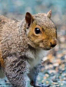 Rodent, Squirrel, Mammal, Cute, Nut, Fur, Wildlife