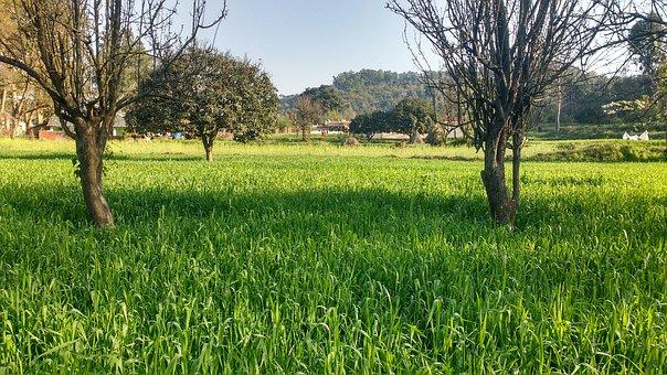 Nature, Landscape, Grass, Tree, Flora, Field, Season