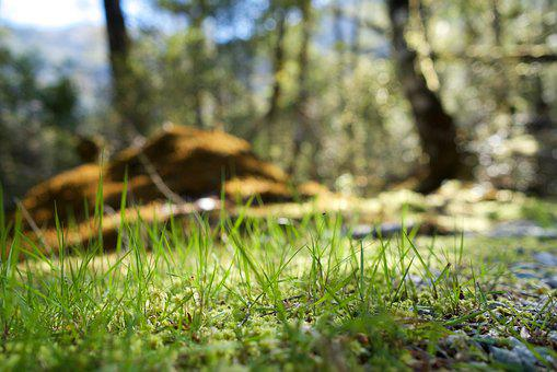 Nature, Wood, Grass, Leaf, Plants, Outdoors, Spring