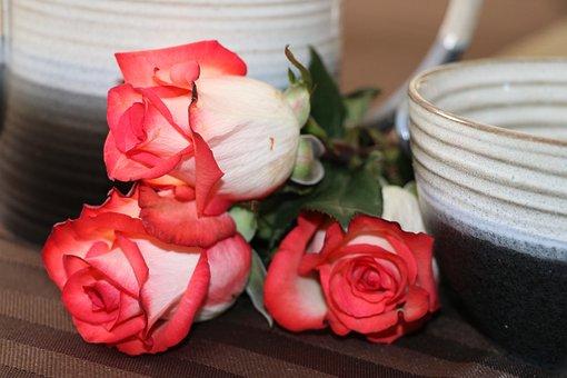 Flower, Rose, Still Life, Tea Pot, Mug