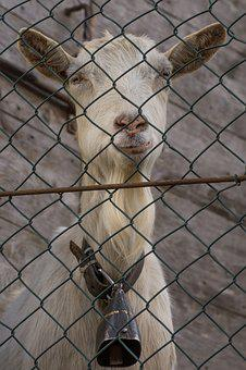 Fence, Animalia, Mammalia, The Seraglio, Nature, Cute