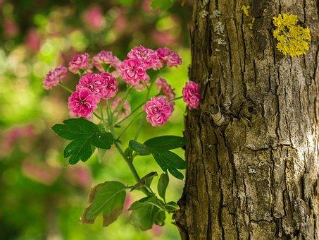 Flower, Tree, Log, Blossom