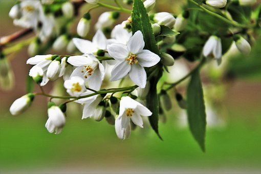 Nature, Biel, Flower, Plant, Garden, Leaf, Bud, Branch