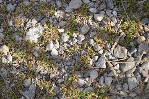Nature, Stone, Flora, Rock, Outdoors, Environment