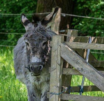 Fence, Donkey, Animal, Farm, Grass, Mammal, Nature