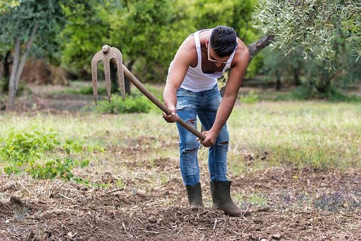 Nature, Outdoors, Farm, Summer, Soil, Farmer, Earth