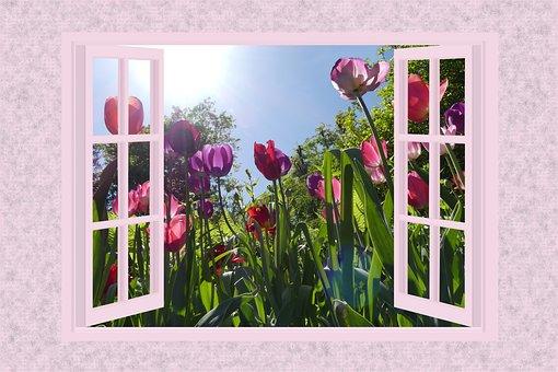 Tulips, Flowers, Plant, Nature, Garden, Floral, Petals