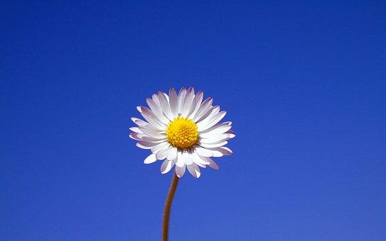 Nature, Summer, Flower, Flora, Bright, Daisy, Blossom