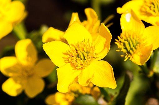 Flower, Nature, Plant, Garden, Flowers, Spring, Summer