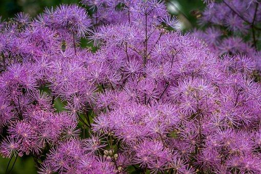 Flower, Plant, Nature, Garden, Summer, Outdoor