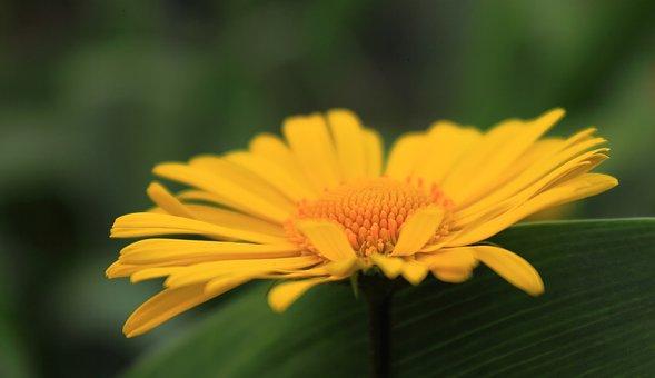Nature, Plant, Flower, Summer, Sheet, Bright, Garden