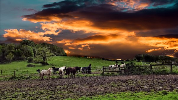 Horses, Horse, Red Sky, Sky, Agriculture, Farm