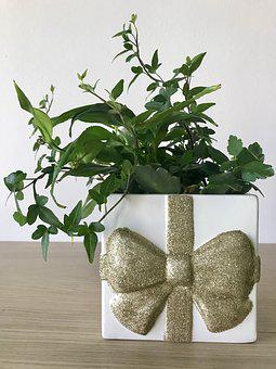 Plant, Indoor Flowers, Living Decoration, Room Flower