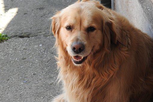 Dog House, Pets, Charming, Animals, Portrait, Mammals