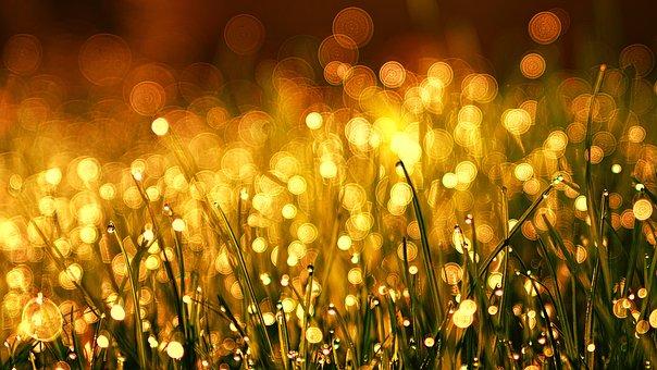Grass, Meadow, Golden, Dew, Bokeh, Kringel, Copper