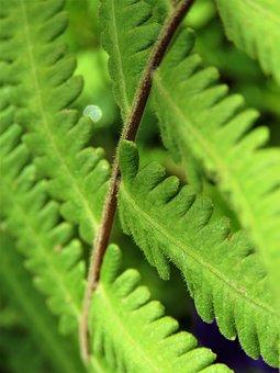 Leaf, Flora, Nature, Fern, Growth, Garden, Frond
