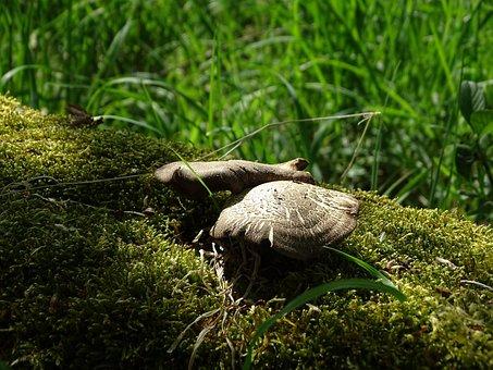 Nature, Grass, Wood, Animal, Animal World, Wild, Summer