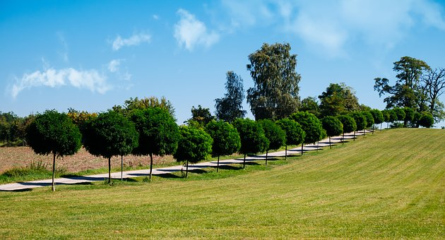 Lawn, Tree, Nature, Summer, Landscape, Panoramic, Field