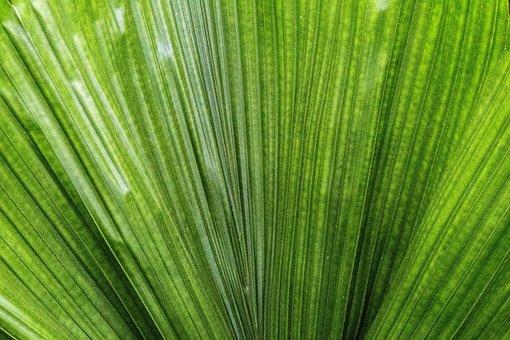 Palm Leaf, Leaf, Plant, Nature, No Person, Summer