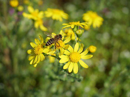 Bee, Flower, Insecta, Pollination, Nature, Pollen