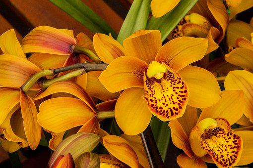 Orchid, Yellow Orchid, Flower, Plant, Nature, No Person