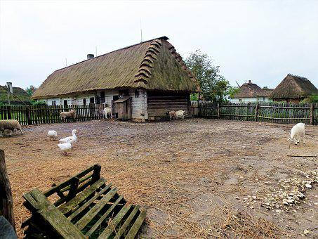 Farm, Outdoor, Nature, Grange, House, Animal, Landscape