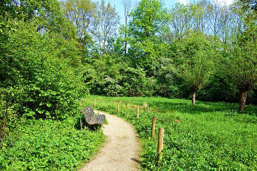 Path, Footpath, Bench, Grass, Trees, Park, Outdoors