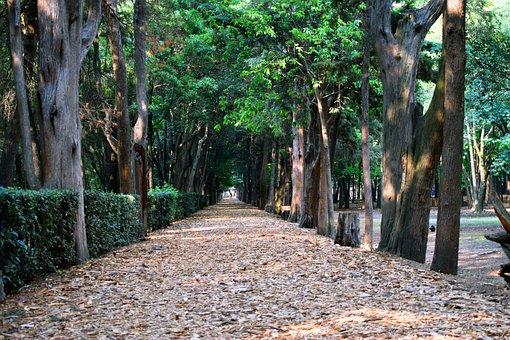Wood, Tree, Nature, Plant, Landscape, Path