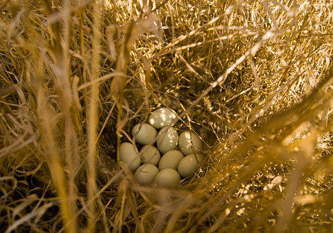 Golden, Nature, Straw, Hay, Grass, Eggs, Jack, Hunting