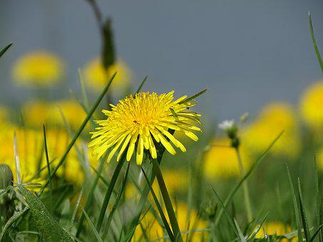 Nature, Grass, Field, Meadow, Summer, Flower, Plant
