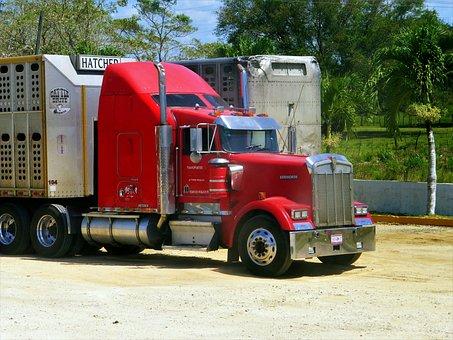 Truck, American, Vehicle, Transport, Truck Truck