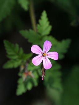 Close Up, Petal, Floral, Wild, Leaf, Flower