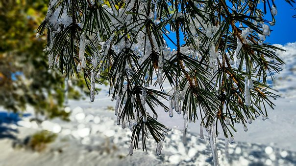 Tree, Nature, Outdoors, Sky, Plant, Branch, Winter