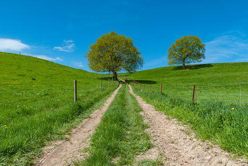 Tree, Lawn, Nature, Landscape, Wood, Outdoor, Rural