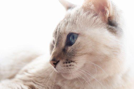 Animal, Cute, Small, Fur, Pet, Cat